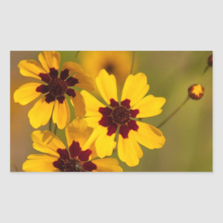 Golden Coreopsis tinctoria Wildflowers Sticker