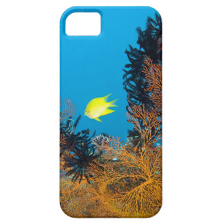 Golden Damselfish (Amblyglyphidodon aureus), Case For The iPhone 5