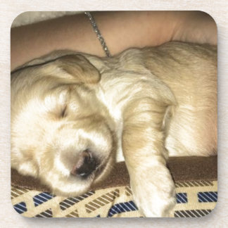 Golden Doodle Puppy Sleeping Coaster