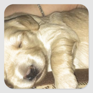 Golden Doodle Puppy Sleeping Square Sticker