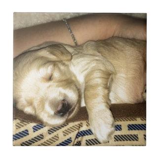 Golden Doodle Puppy Sleeping Tile
