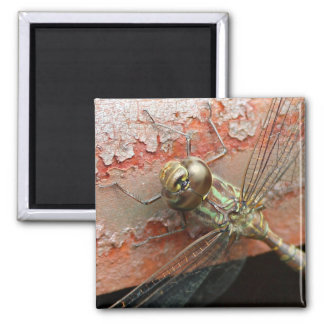 Golden Dragonfly Magnet