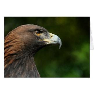 Golden Eagle Aquila Chrysaetos Card