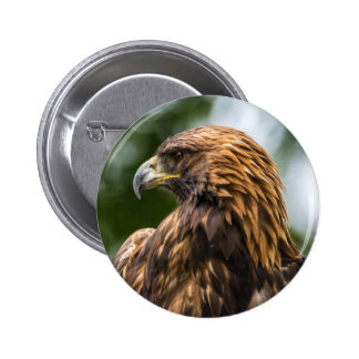 Golden Eagle (aquila chrysaetos) - Utah 2 Inch Round Button