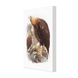 Golden Eagle John Gould Birds of Great Britain Canvas Print