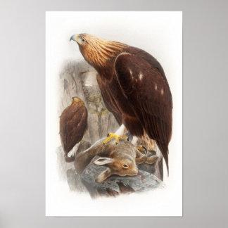 Golden Eagle John Gould Birds of Great Britain Poster