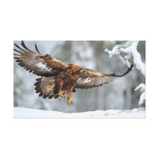 Golden Eagle photo Canvas Print