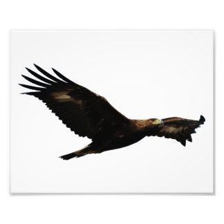 Golden Eagle Soaring Photograph