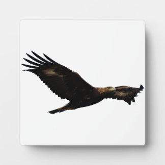 Golden Eagle Soaring Display Plaques