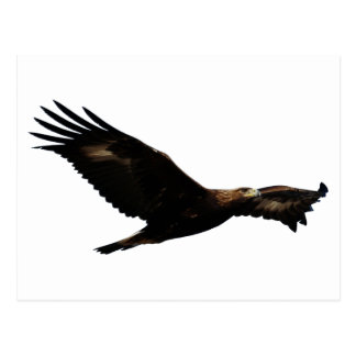 Golden Eagle Soaring Post Card