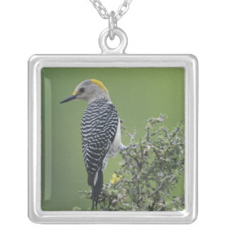 Golden-fronted Woodpecker, Melanerpes 2 Silver Plated Necklace