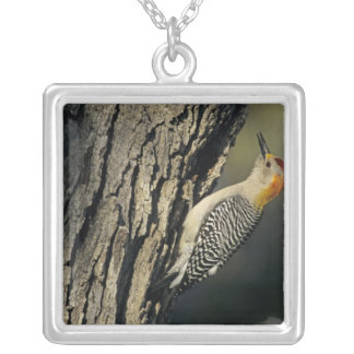 Golden-fronted Woodpecker, Melanerpes Silver Plated Necklace