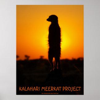 Golden glow meerkat poster