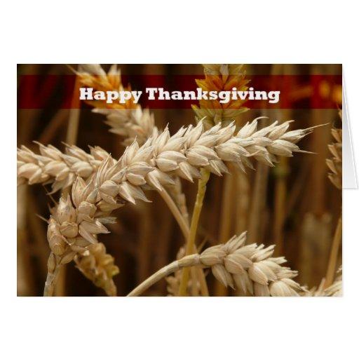 Golden Grain Happy Thanksgiving  Greeting Card