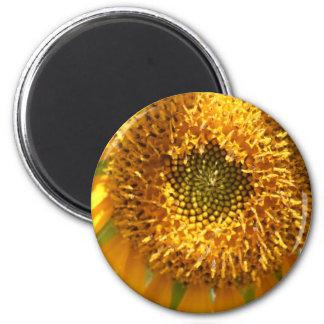 Golden Hues magnet