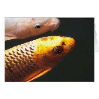 Golden Koi Fish Card