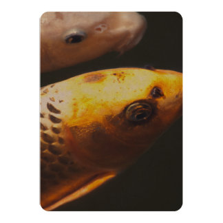 Golden Koi Fish Card