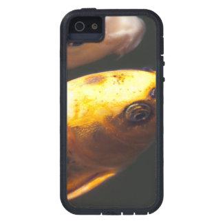 Golden Koi Fish iPhone 5 Cases