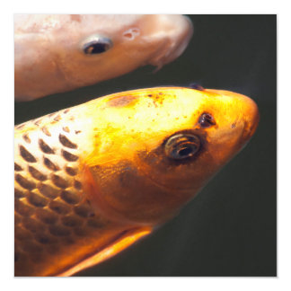Golden Koi Fish Magnetic Invitations
