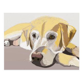Golden Labrador Postcard