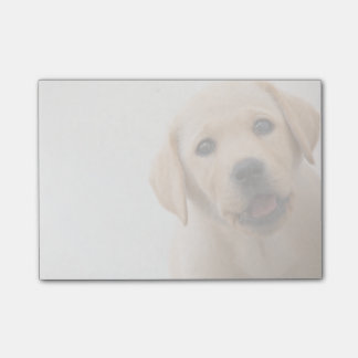 Golden Labrador Puppy (8 Months Old) Post-it Notes