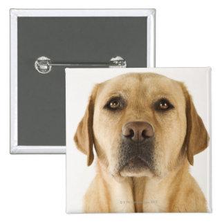Golden Labrador Retriever (Canis familiaris). 2 Inch Square Button