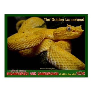 Golden Lancehead, most dangerous endangered snake Postcard