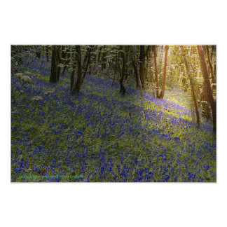 Golden Light In Bluebell Wood Photo Art