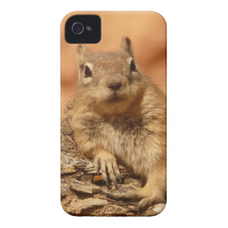 Golden Mantled Ground Squirrel Case-Mate iPhone 4 Cases