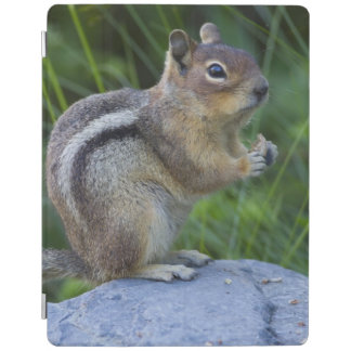 Golden Mantled Ground Squirrel iPad Cover