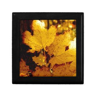 Golden Maple Leaves on St Joseph Island Gift Box