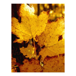 Golden Maple Leaves on St Joseph Island Personalized Letterhead