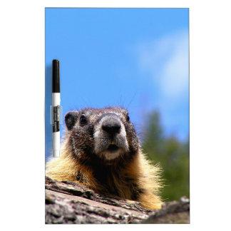 Golden Marmot in Canada Dry Erase White Board