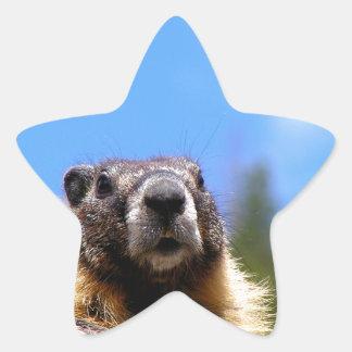 Golden Marmot in Canada Star Sticker