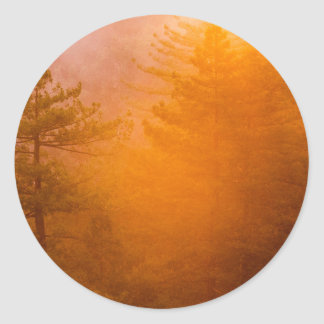 Golden Morning Glory Forest Classic Round Sticker