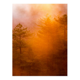 Golden Morning Glory Forest Postcard