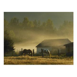Golden Morning Graze Postcard