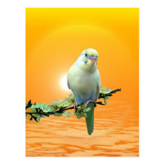 Golden Parakeet Postcard