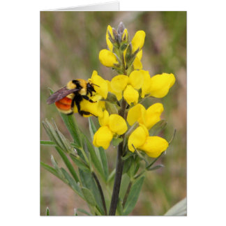 Golden Pea Greeting Card