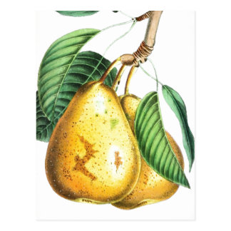 Golden pear Recipe Card