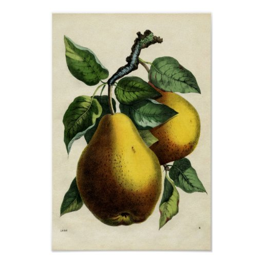 Golden Pears Print