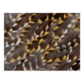 Golden Plover Feathers Postcard