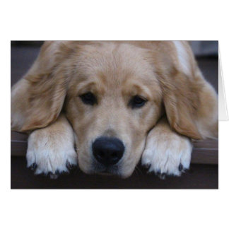 Golden Puppy Paws Greeting Card