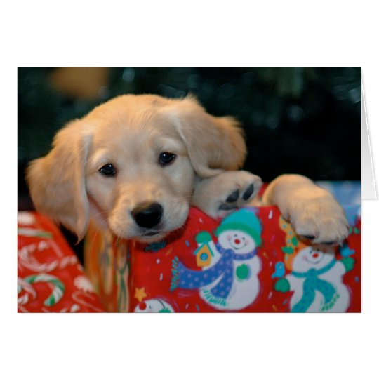 Golden Puppy Present Christmas Card