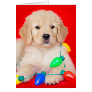 Golden Puppy Tangled in Christmas Lights Card
