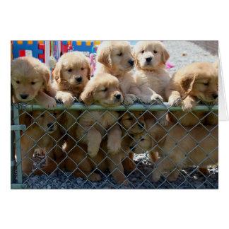 Golden Pups Card