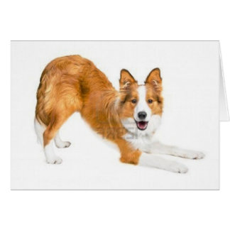 Golden Red Border Collie Notecard Greeting Card