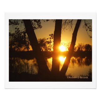 Golden Reflection with tree's Photo Enlargement