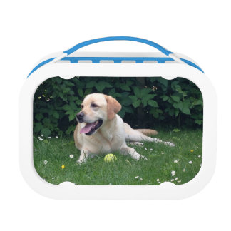 Golden Retreiver Lunch Box