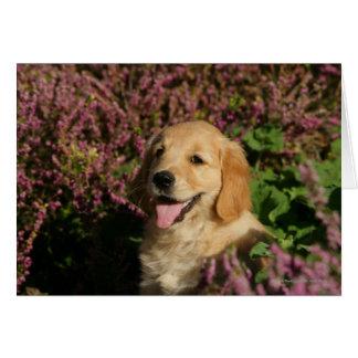 Golden Retreiver Puppy Card